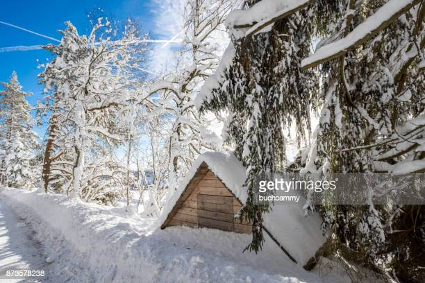 schnee im wald - schnee stock pictures, royalty-free photos & images