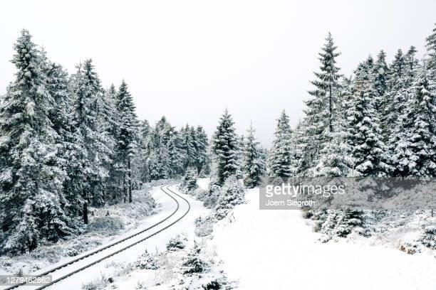 schneelandschaft im wald - in bodenhöhe stock pictures, royalty-free photos & images