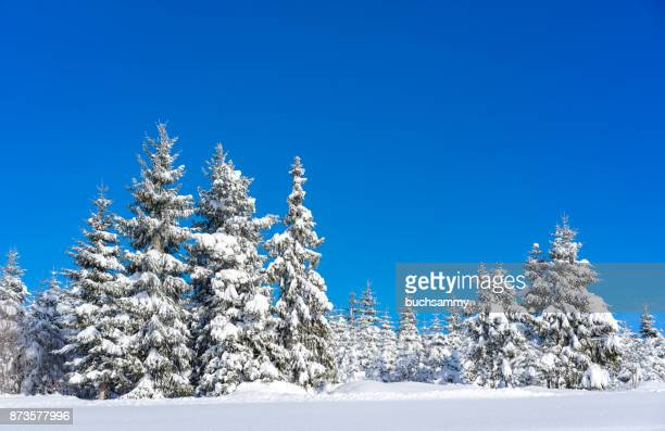 Schneelandschaft Photos Et Images De Collection Getty Images