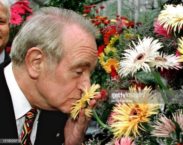 Der nordrheinwestfälische Ministerpräsident Johannes Rau riecht am 25498 an einer der vielen Blumen auf der 7 Landesgartenschau in Jülich Der...