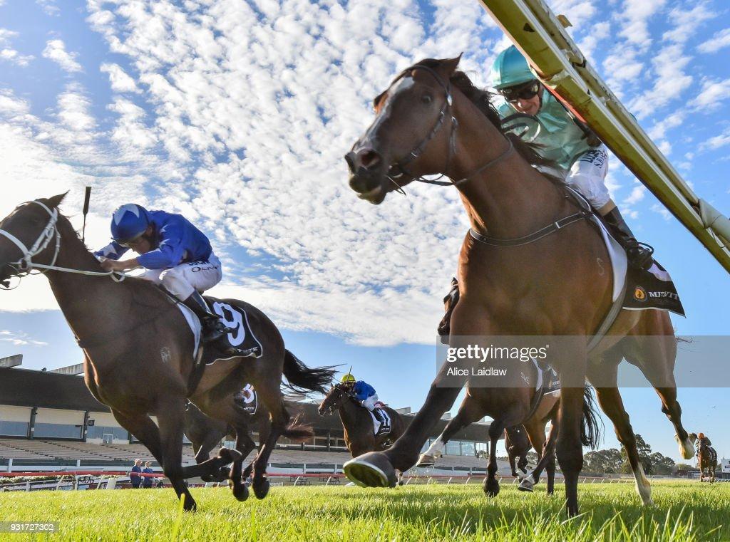 Scholarly (NZ) ridden by Stephen Baster wins the Mitavite Summer Challenge Heat 7 at Ladbrokes Park Hillside Racecourse on March 14, 2018 in Springvale, Australia.
