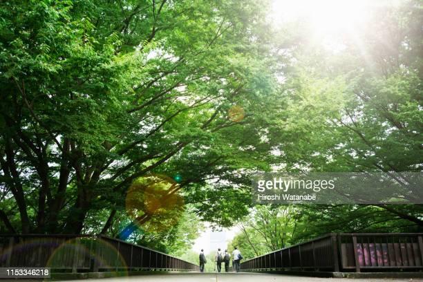 school boys  walking on the promenade - 青々とした ストックフォトと画像