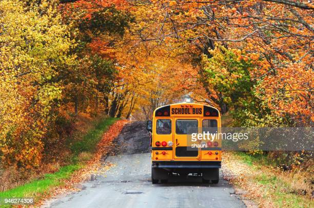 school bus - back to school stock pictures, royalty-free photos & images