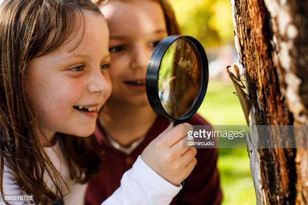 school children exploring insects - insect stock pictures, royalty-free photos & images
