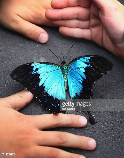 """School children interact with a Ulysses butterfly during the opening of the interactive butterfly habitat """"Flutterbys"""" at Sydney Wildlife World June..."""