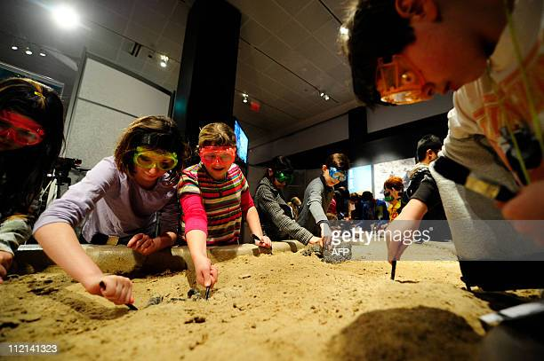 School children learn how to dig fossils at 'The World's Largest Dinosaurs' exhibition an exhibition exploring the biology of sauropods a group of...