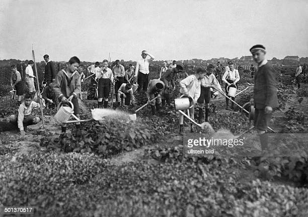 schoolboys take care of the vegetable beds of absent students supervised by a teacher undated probably around 1910