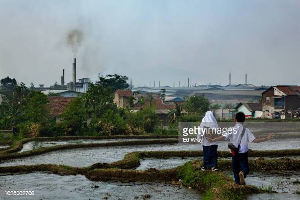 School kids walk through a rice paddy overlooking the dozens of textile mills which have been using the Citarum River to dump their waste water on...