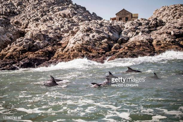 School of dolphins is seen is seen swimming outside St. Croix island in Algoa Bay outside Port Elizabeth, on July 08, 2020. - Nestled half-way along...