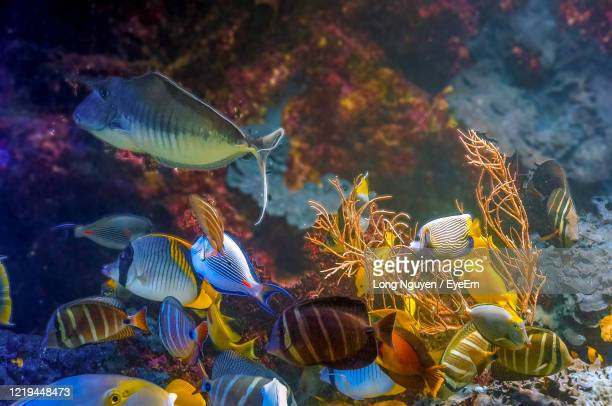 school of exotic fishes swimming - reef stock pictures, royalty-free photos & images