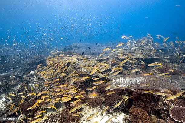School of fish in the coral reef