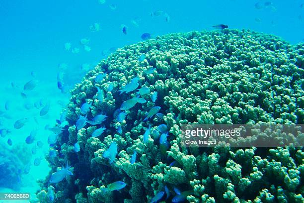 School of fish near a reef, Majuro, Marshall Islands
