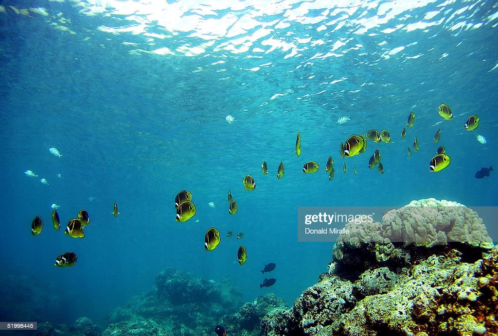 Coral Reefs In Danger : News Photo