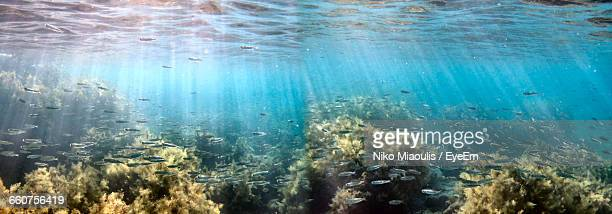 school of fish - panoramic stock pictures, royalty-free photos & images