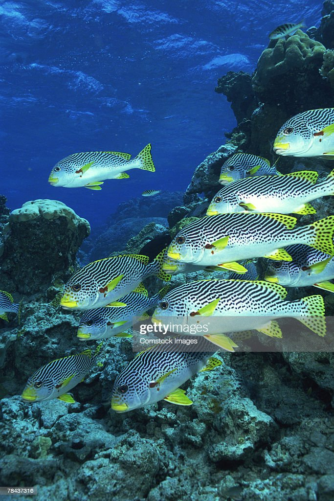 School of fish : Stockfoto