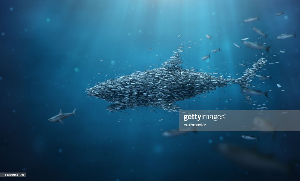 School of fish stronger together teamwork : Stock Photo