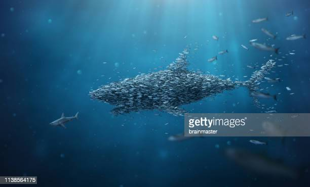 school of fish stronger together teamwork - sharks stock pictures, royalty-free photos & images