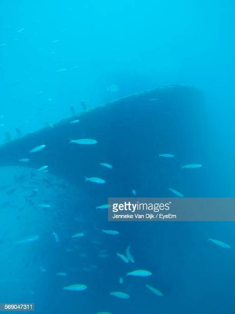 School Of Fish Swimming By Shipwreck In Blue Sea