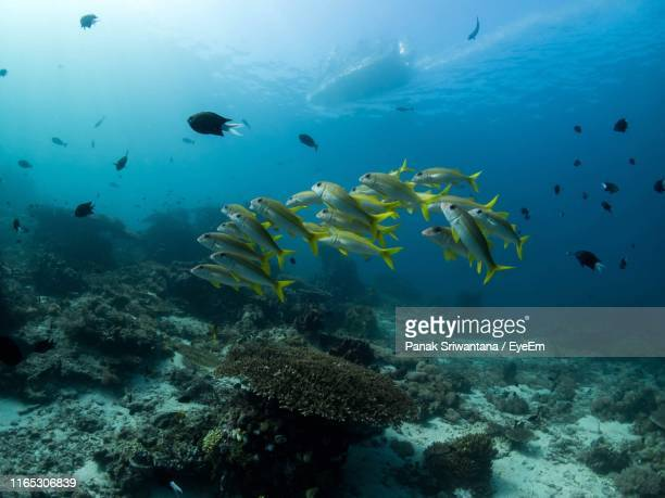 school of fish swimming in sea - plankton stock pictures, royalty-free photos & images