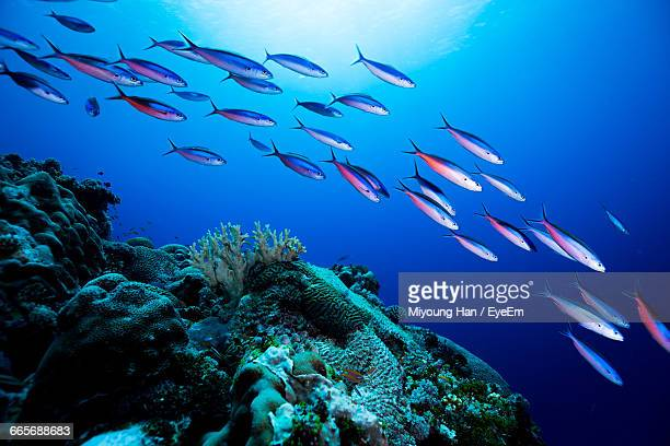 school of fish swimming in sea - school of fish stock pictures, royalty-free photos & images