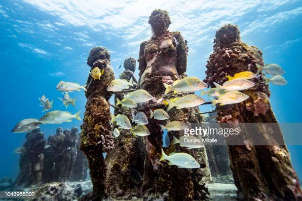 A school of fish swims past the underwater statues at MUSA off the coast of Isla Mujeres Mexico on September 26 2018 Consisting of over 500 permanent...