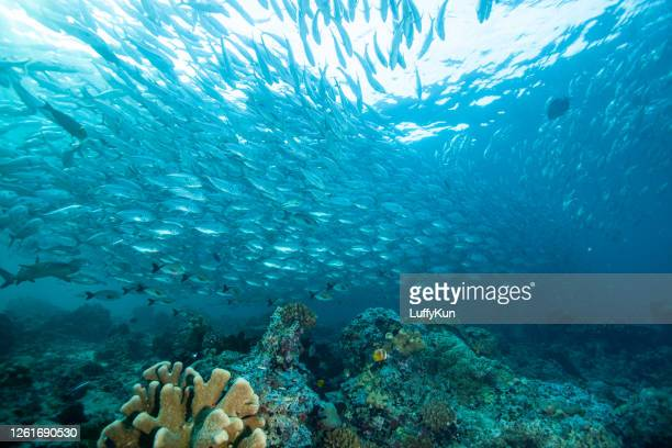 school of fish , tropical fishes, - ocean floor stock pictures, royalty-free photos & images