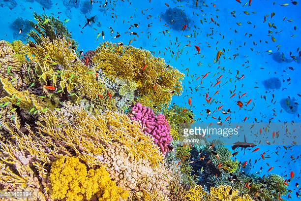 school of fishes in goral garden on red sea - ecosystem stock pictures, royalty-free photos & images