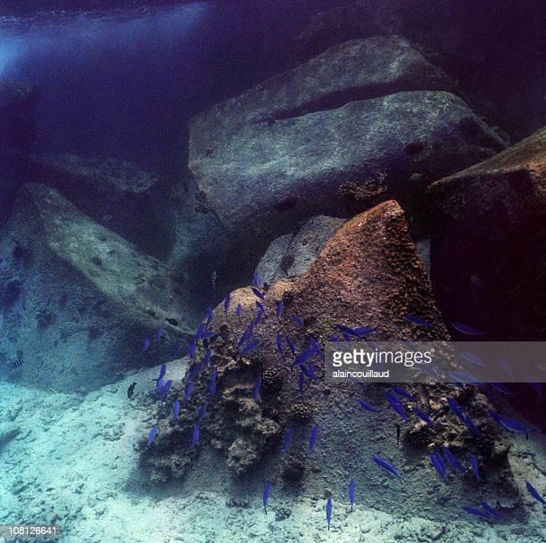 学校のリトルブルーの魚の水中近くの岩 - オキスズキ ストックフォトと画像