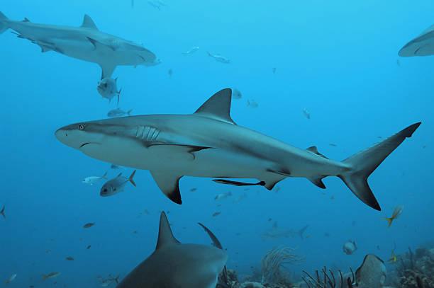 shark attack case study