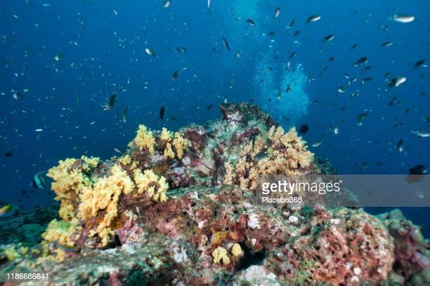 活気に満ちたサンゴ礁生態系上の熱帯魚の学校 - スクーバダイビングの視点 ストックフォトと画像