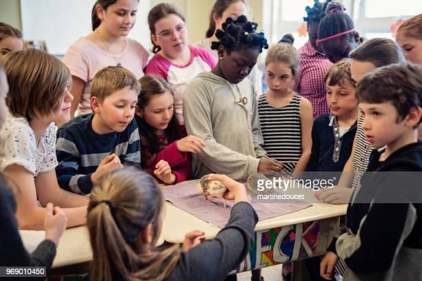 """学校のプレゼンテーション、教室でハリネズミを発見します。 - """"martine doucet"""" or martinedoucet ストックフォトと画像"""
