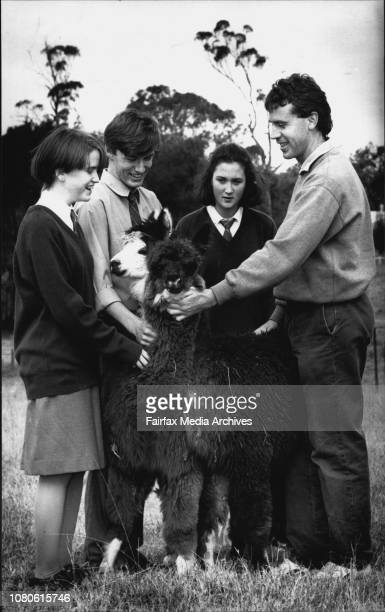 School Series Hurlstone Agricultural High School GlenfieldYear 10 students with the schools Alpacas Left to Right Tara Murphy 15 Ben Nicholson 16...
