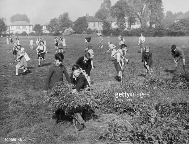 Schoolboys from the Drury Falls Council School at work digging and clearing their allotment plot as part of the Dig for Victory campaign on 9th...