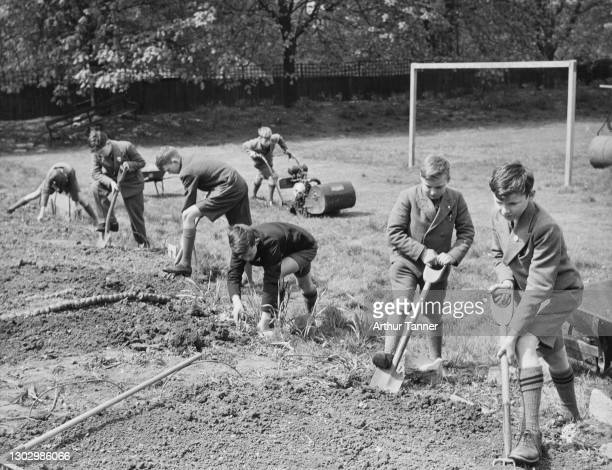 Schoolboys from the Dulwich Preparatory School at work digging and clearing their allotment plot on the site of their football pitch for the Dig for...