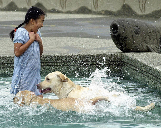 A Schoolgirl And Two Dogs Splash Water T Pictures Getty Images