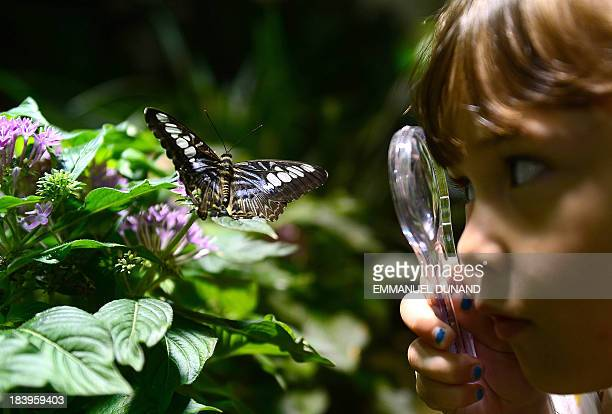 A schoolgirl looks at a specimen during a preview visit of the butterfly conservatory at the American Natural History Musem in New York October 10...