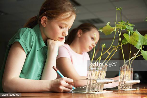 Schoolgirl (11-13) writing at desk with plants growing in test tubes