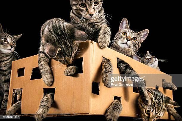 Schrödinger's Catbox