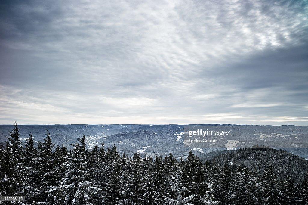 Schwarzwald : Stock-Foto