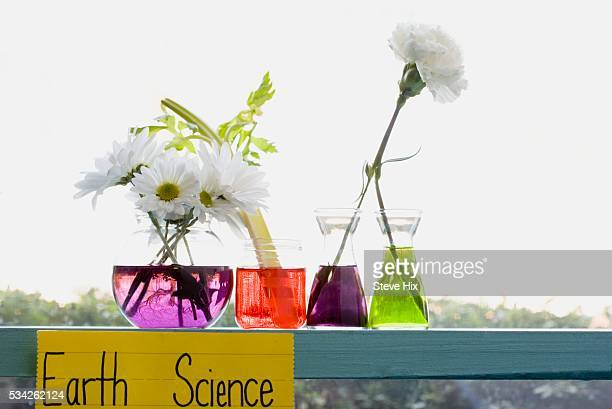 science experiment - carnation flower stock photos and pictures
