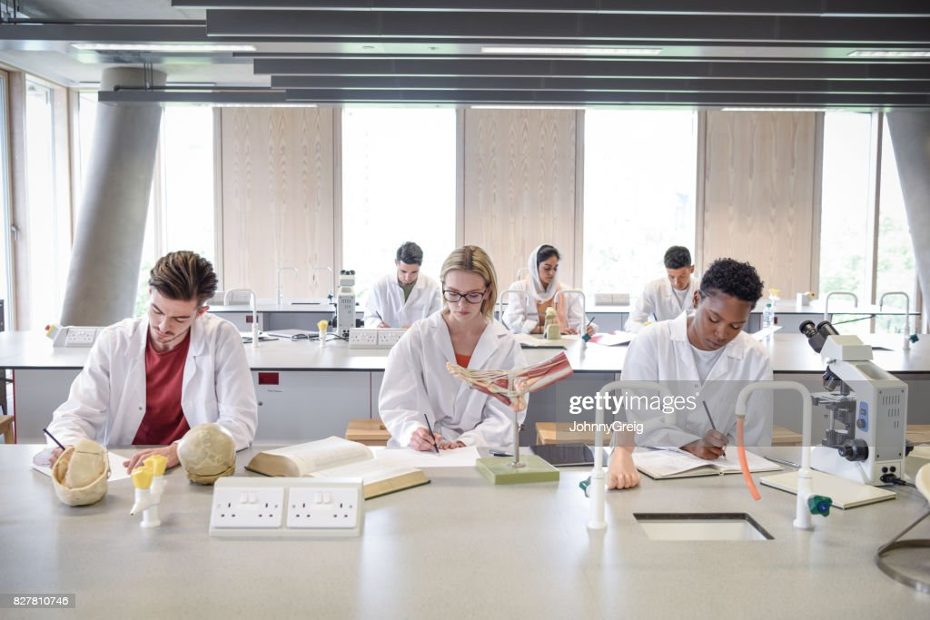 Science students in laboratory with anatomical models, making notes : Stock Photo