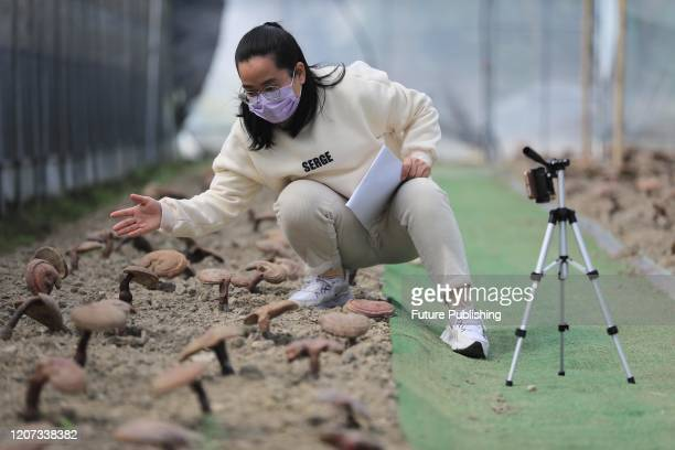 A science teacher livestreams from the field of mushroom to her students in Hangzhou in east China's Zhejiang province Monday March 16 2020 Campuses...