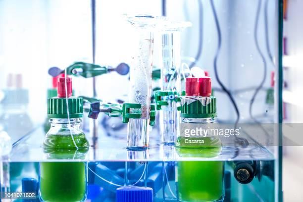 緑の藻と研究室での科学実験 - green algae ストックフォトと画像