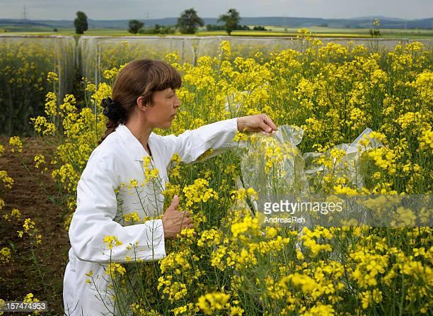 Scientific plant culture