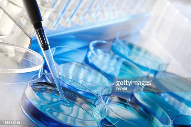 scientific research - petri dish stock photos and pictures