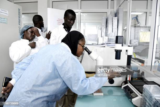 Scientific staff members works in a secure laboratory, researching the coronavirus, at the Pasteur Institute in Dakar on February 3, 2020. - The...