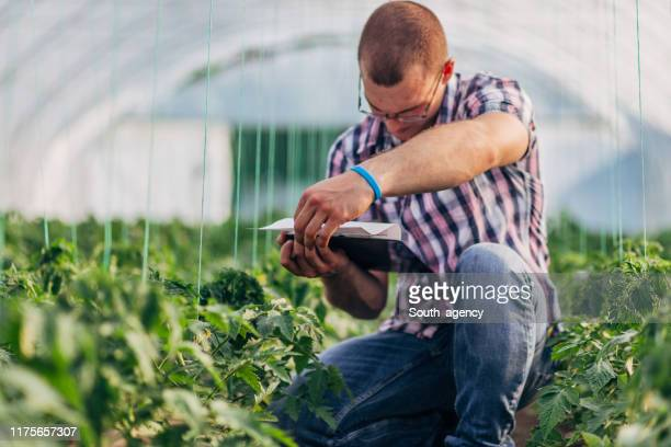 scientist checking his notes on organic farm - microbiologist stock pictures, royalty-free photos & images