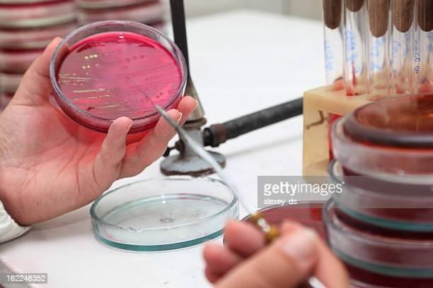 Scientifique analyse petry chèques dans un plat