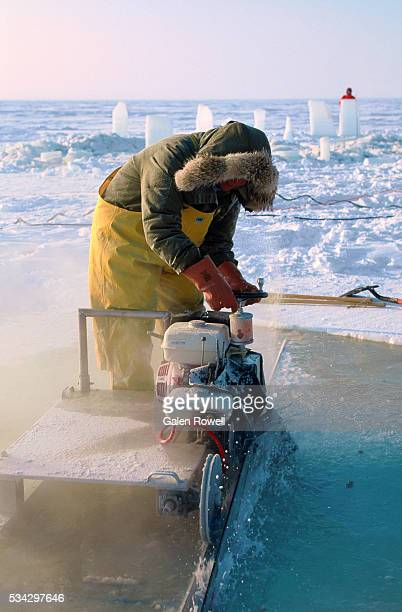 scientist conducting sea ice test - barrow alaska stock pictures, royalty-free photos & images