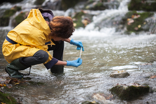 Scientist Ecologist Taking a Water Sample in the Forest 1125152554